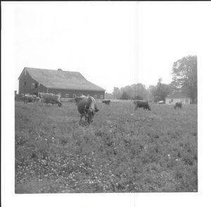 OLD BARN PICS 5